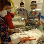 VIDEO REPORTAJ Sibiu: Paul, cel mai performant simulator pentru îngrijirea prematurilor, pentru prima dată în România